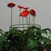 Tuteurs pour plantes